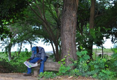 While sitting under a tree, a man catches up on the latest news. By Rutendo Nyamuda